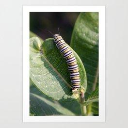 Monarch Caterpillar Art Print
