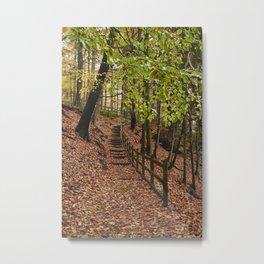 Steps through autumnal woodland. Derbyshire, UK. Metal Print