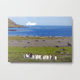 King Penguins on the beach with an Iceberg behind Metal Print