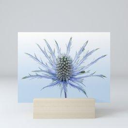 Sea Holly Single  Mini Art Print