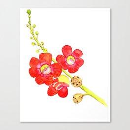Cannonball tree flower Canvas Print
