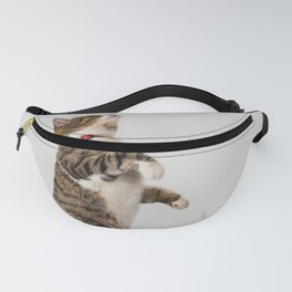 active cat playing Fanny Pack