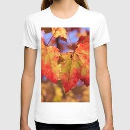 Autumn in Canada - Maple leafs T-shirt