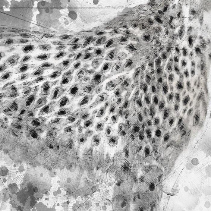 Cheetah in Black and White Leggings
