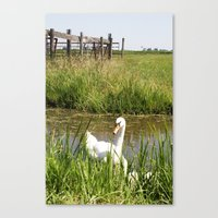 swan Canvas Prints featuring Swan by Kakel-photography