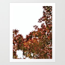 Changing of Seasons Art Print