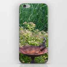 Out of Water iPhone & iPod Skin