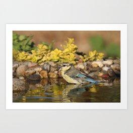 young bird bathes Art Print