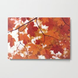 Fluttering from the Autumn tree Metal Print