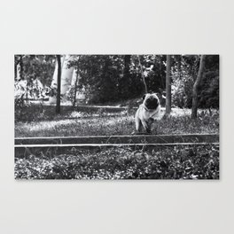 Running Pug Canvas Print