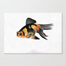 Demekin Goldfish Isolated On White Canvas Print
