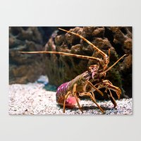 lobster Canvas Prints featuring Lobster by Moonlake Designs