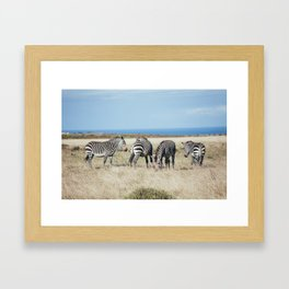 Four Zebras Framed Art Print