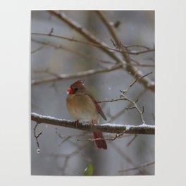 ladybird. Poster