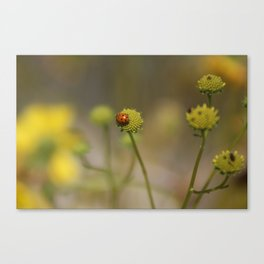 Ladybug on Lemon Yellow Wildflowers Coachella Valley Wildlife Preserve Canvas Print