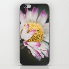 Raindrops on a daisy iPhone Skin