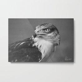 Red-tailed Hawk II BW Metal Print