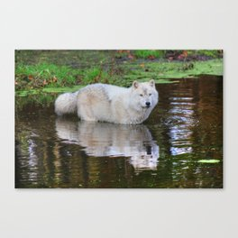 Wolf Reflection Canvas Print