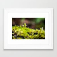 moss Framed Art Prints featuring Moss. by Michelle McConnell