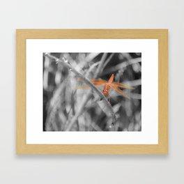 """Dragonfly 2"" by Murray Bolesta! Framed Art Print"