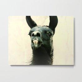 Mr. Llama Metal Print