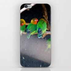 Agapornis Fischeri iPhone Skin