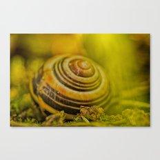 Beautiful Snail shell Canvas Print