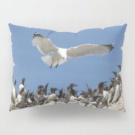 Seagull hovering over birds Pillow Sham