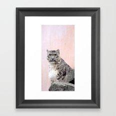 Snow Leopard in Pink Framed Art Print
