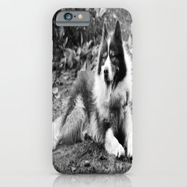 greenland dog iPhone Case