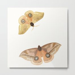 Two Moths - Vintage Illustration Metal Print