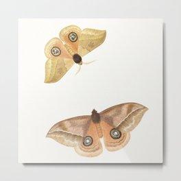 Two Moths - Vintage Illustration Metal Print