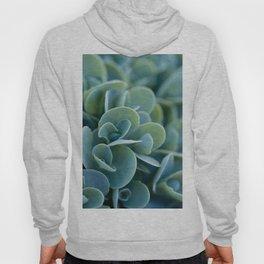 Pretty Plants Hoody