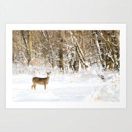 Winter Deer · ii Art Print
