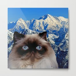 Himalayan Cat Metal Print