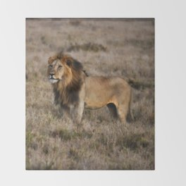 African Lion in Kenya Throw Blanket