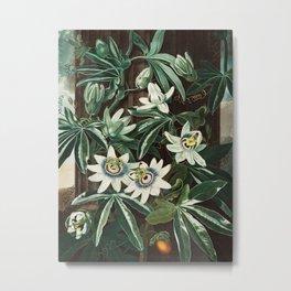 Robert John Thornton - The Passiflora Cerulea Metal Print