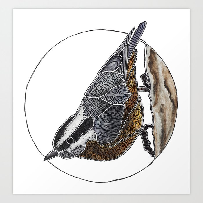 Red-breasted Nuthatch Art Print by Caitlin - X-Small (s6-13709002p4a1v45) photo