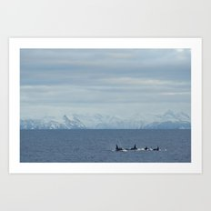 Killerwhales Art Print