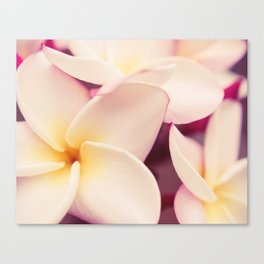 White Plumeria Fine Art Photography Canvas Print
