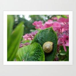 marcel the shell Art Print