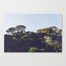 Monterosso trees Canvas Print