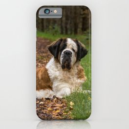 Big cute St Bernard dog in Autumn iPhone Case