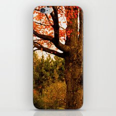 Autumn Lights iPhone & iPod Skin