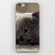 Dieslchen iPhone Skin