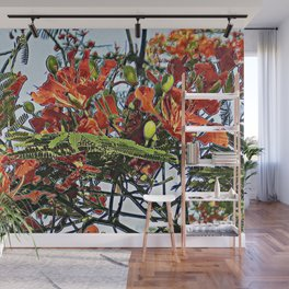 Tropical Royal Poinciana Tree Full Bloom Wall Mural