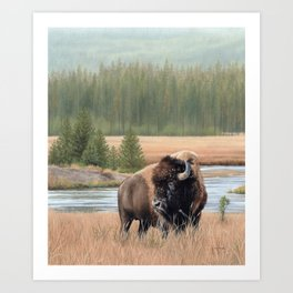 American Bison Painting Art Print