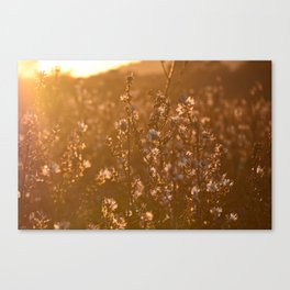 Flowers in the sunset light Canvas Print