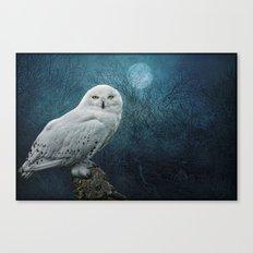 Night Owl Canvas Print