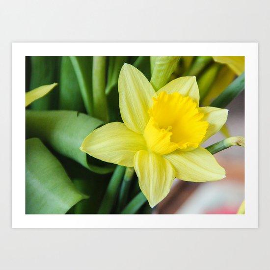 Yellow Daffodil Art Print